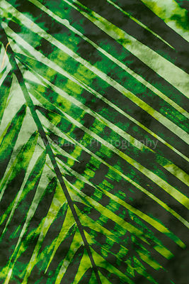 tropical_colors_02