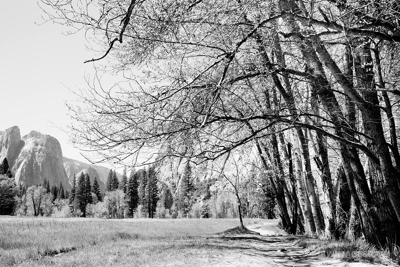 YOSEMITE NATIONAL PARK CALIFORNIA BLACK AND WHITE