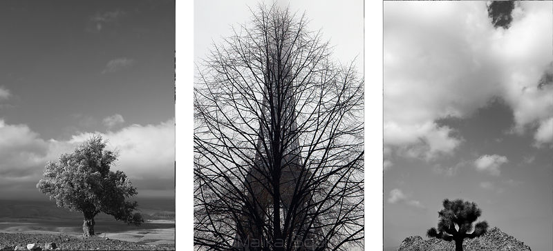 One - Two - Tree photos