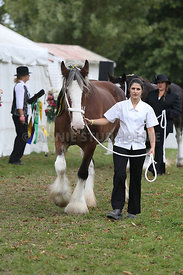 HOY_220314_Clydesdales_2351