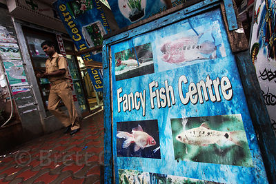 Fancy Fish Centre shop in Newmarket, Kolkata, India. There is a brisk retail pet business serving India's middle and upper classes. Conditions for the animals are often dismal.