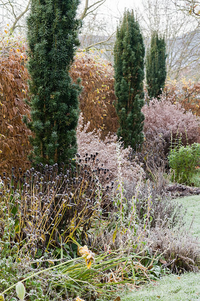 In the part of the garden called Arcanum a snaking grass path runs between herbaceous borders planted with perennials flowering in a range of hot colours, including astrantias, achilleas and evening primrose, with seven Irish yews providing height.