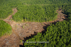 Aerial photograph of clear-cutting in the Northern Neck of Virginia.