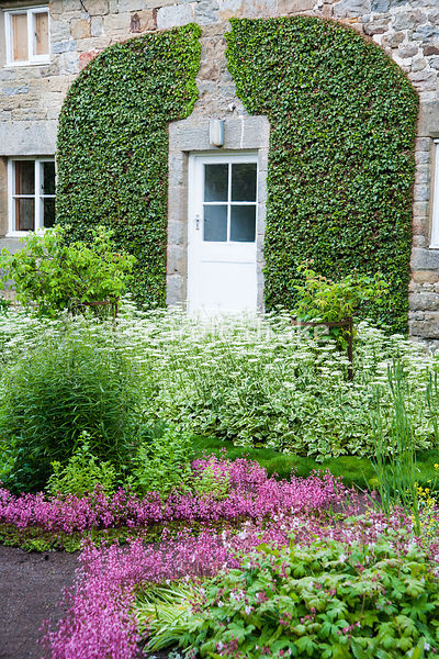 The Physic Garden features  beds edged with London Pride, Saxifraga 'Clarence Elliot', and planted with apothecaries plants including variegated ground elder, Aegopodium podagraria 'Variegatum'. Herterton House, Hartington, Northumberland, UK