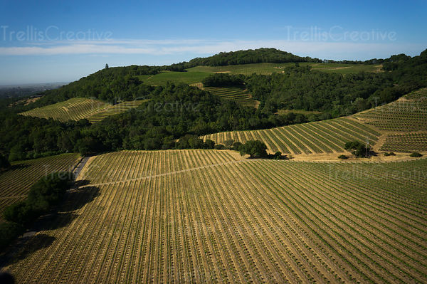 Aerial view of fresh shades of green on vineyards rolling over the hillside with blue skies