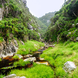 Mountain Wilderness: Western Cape photos