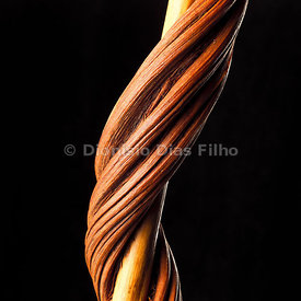 Twisted Wood on a black background.