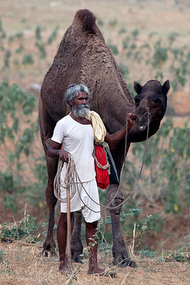 Looking a bit like moses, a camel herder at the 2010 Pushkar Camel Fair, Rajasthan, India