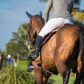 Show Jumping horses pictures
