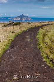 Smugglers Road on Santa Cruz with Anacapa Island Distant