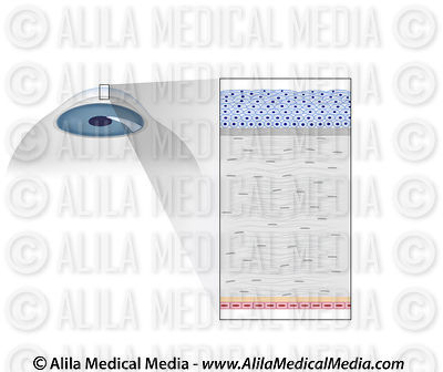 Ophthalmology & Optometry Images & Videos images