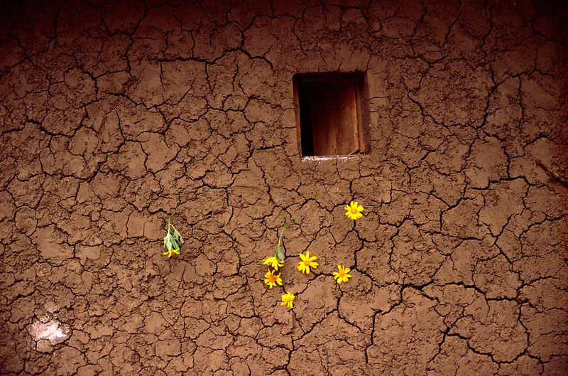 Rwanda - Kibileze - Flowers placed in the wall of a mud house