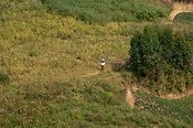 Woman walking on track up hillside. Rwanda