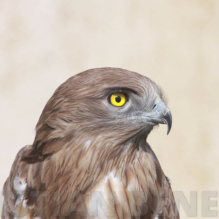 rapace photos