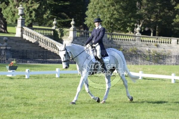 Dressage 1600-1700 photos