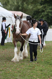 HOY_220314_Clydesdales_2352