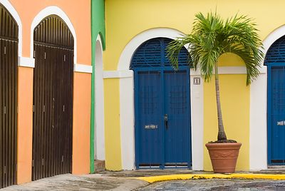 Palm and Blue Doors