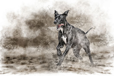 Art-Digital-Alain-Thimmesch-Chien-656