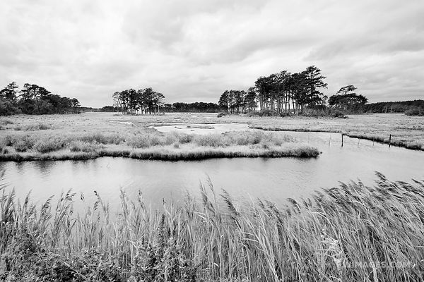 ASSATEUGUE ISLAND NATIONAL SEASHORE CHINCOTEAGUE NATIONAL WILDLIFE REFUGE VIRGINIA BLACK AND WHITE