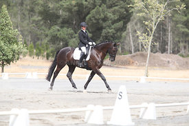 SI_Festival_of_Dressage_310115_Level_1_Champ_0685