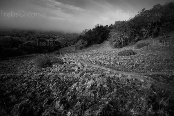 Aerial view of a foggy morning black and white photograph of the hillside in Sonoma regional park