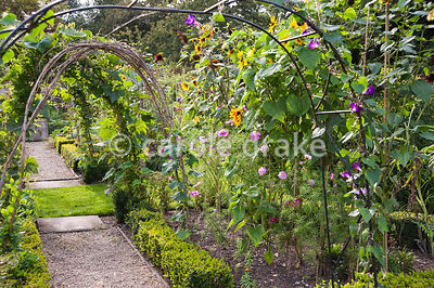 Hazel arches trained with gourds in the Tunnel Garden used for growing fruit, vegetables and flowers for cutting. Heale House, Middle Woodford, Salisbury, Wilts, UK