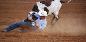 Bulldogging cowboy at Cheyenne Frontier Days Rode