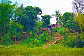 Steps_up_to_a_Mekong_village_oil