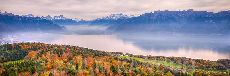 Panorama - Autumn colors tree carpet with  the Swiss Alps and the Leman lake