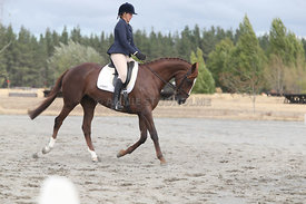SI_Festival_of_Dressage_310115_Level_1_Champ_0710