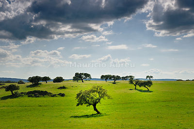 Cork trees in the vast plains of Alentejo, Portugal