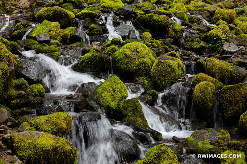 MOSSY ROCKS FOREST STREAM SOL DUC FALLS TRAIL OLYMPIC NATIONAL PARK WASHINGTON PACIFIC NORTHWEST FOREST