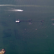 Aquaculture, Olbia