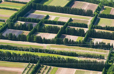 Agricultural Fields, Southern Ontario
