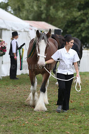 HOY_220314_Clydesdales_2353