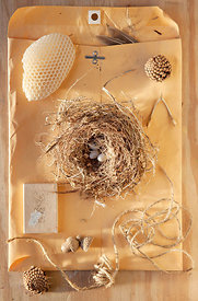 collection of natural found objects