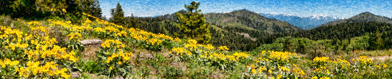 Panoramic_Sunflowers_FBK2