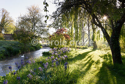 Sun breaks through trees underplanted with camassias beside a tributary of the River Avon at Heale House, Middle Woodford, Wiltshire on a frosty April morning