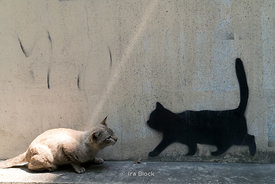 A cat interacts with wall art in Bangkok, Thailand.