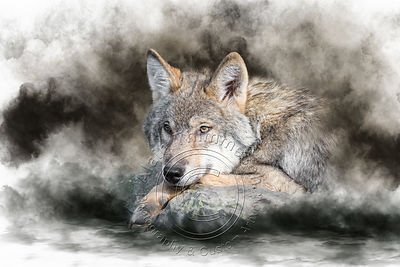 Art-Digital-Alain-Thimmesch-Loup-39