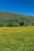 Wildflower meadow in full bloom near Ravenstonedale, Cumbria, inside the Yorkshire Dales National Park.