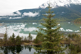 Scene around Mendenhall Glacier in Juneau Alaska.