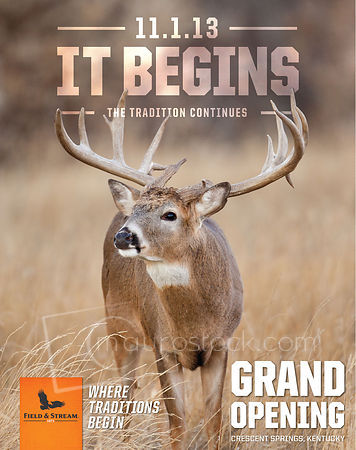 Whitetail Buck Poster photos