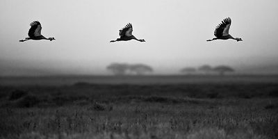 4785-Bird_Laurent_Baheux