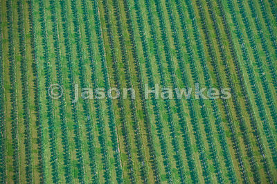 Aerial view of fruit farm