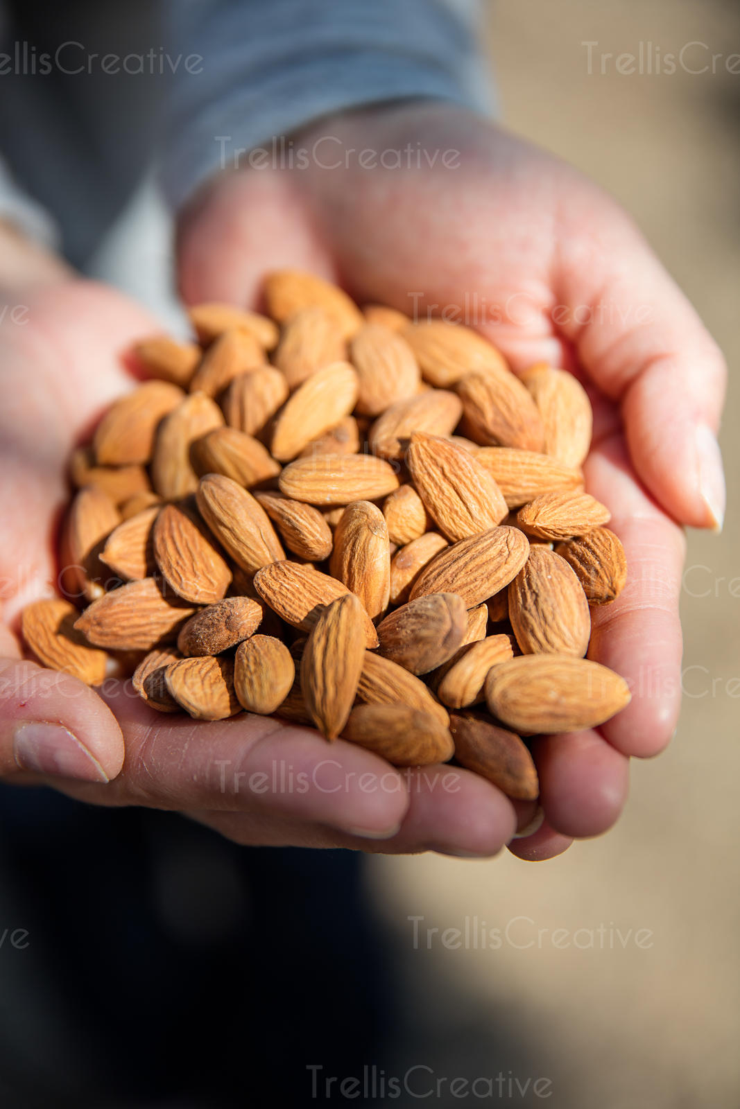 A woman with hands filled with freshly harvested almonds