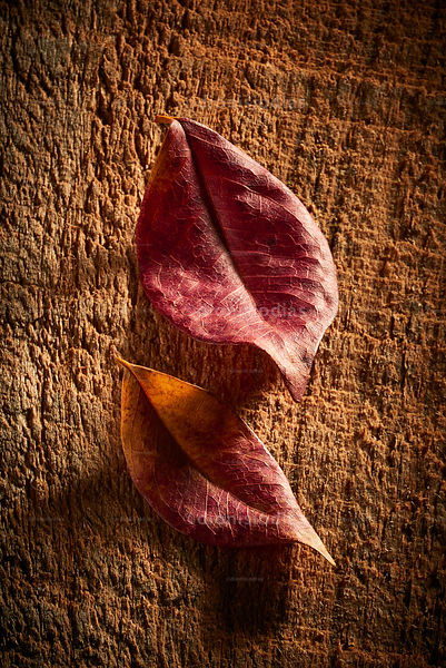 Two dried leaves on rustic wood