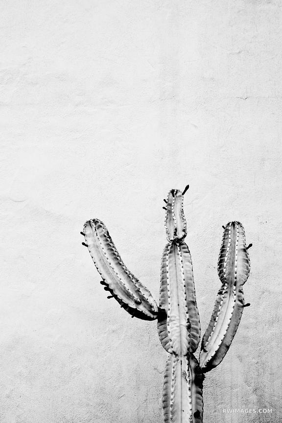 CACTUS WHITE STUCCO WALL SANTA BARBARA  BLACK AND WHITE VERTICAL