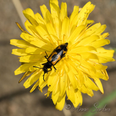 Beetles photos