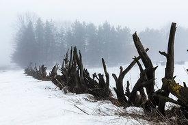 Old Stump Fence in Central Michigan on a Winter Day